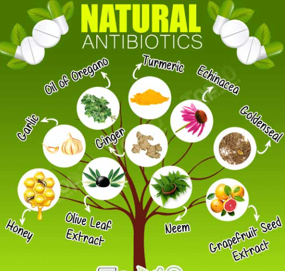 Best Natural Antibiotics